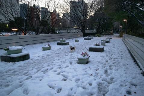 新宿中央公園を散歩中のワンコ