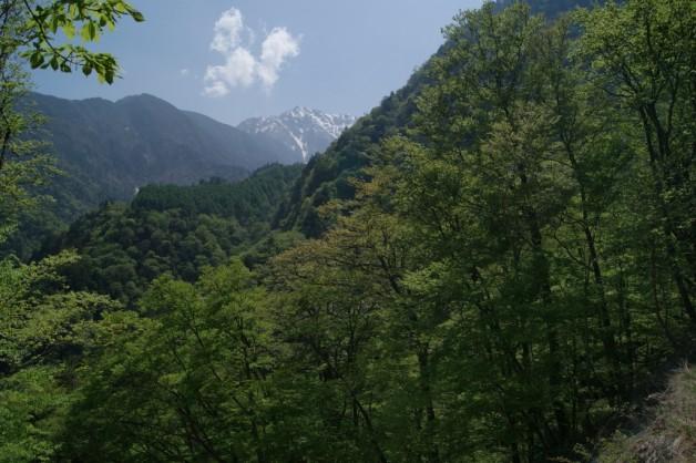 まだまだ新緑(だった、先々週は)の日向山(山梨県)